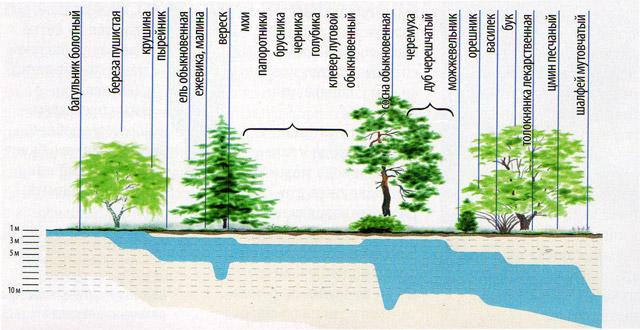 Растения-индикаторы воды